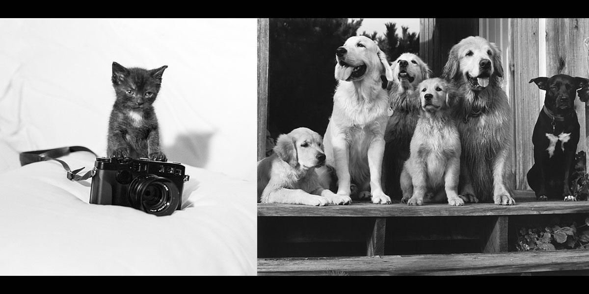 ブルース・ウェーバーの飼い犬&猫がTシャツに! エクスクルーシブなBIOTOPのアニバーサリーコラボ。